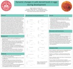 Dynamic Changes in Yolk Steroid Levels in Eggs During Development by Teagan Sudbrook